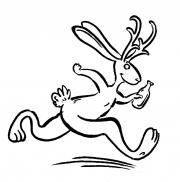 Jackalope Run